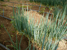 まごころ畑,食材,加工管理