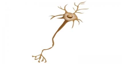 筋委縮性側索硬化症(ALS)とは